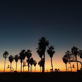 Sundown at Venice by Andy Chinn - Instagram & Mobile iPhone ( venice beach, silhouette, sunset, palm trees, landscape )
