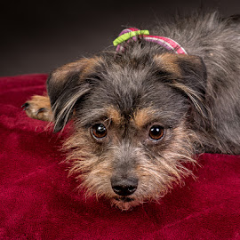 by Myra Brizendine Wilson - Animals - Dogs Portraits ( canine, foster dog, dogs, foster nadine, pet, pets, nadine, gcspca, dog, foster dog nadine, greater charlotte spca )