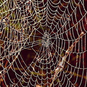 by Helen Beatrice - Nature Up Close Webs