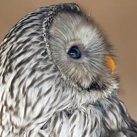 by Stanley P. - Animals Birds