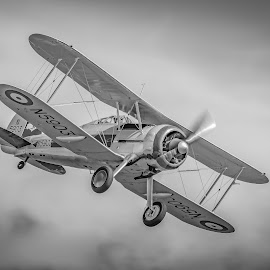 Gloucester Gladiator by Anthony P Morris - Transportation Airplanes ( airoplne, anthony morris, duxford, planesairoplanes, gloucestergladiator, planes, airshow )