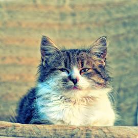 Jojo in action by Borislav Seifert - Animals - Cats Portraits