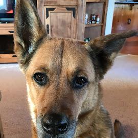 Portrait of Cozy by Mel Bishow - Animals - Dogs Portraits ( © mel bishow,  )