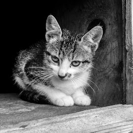 by Oiegar Andrei - Animals - Cats Portraits