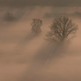 Trees in the mist by Pietro Ebner - Nature Up Close Trees & Bushes ( tree, fog, shadow, trees, mist )