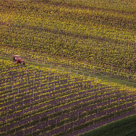 Vineyards by Darja Pavlacká - Landscapes Prairies, Meadows & Fields ( vineyards, south moravia, czech republic )