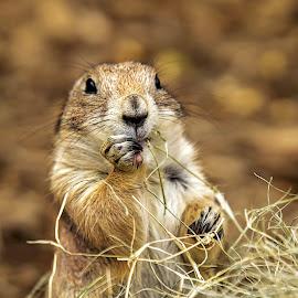 by Carol Plummer - Animals Other Mammals
