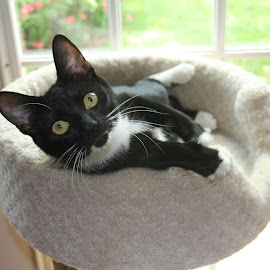 Mari by Christine Urick - Animals - Cats Portraits ( tuxedo cats, green eyed cat, animal - cats, felines )