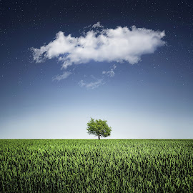 A tree covered with clouds by Bess Hamiti - Digital Art Places ( clouds, sky, nature, tree, grass, green, stars, landscape )