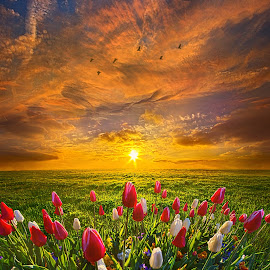 Drawing Near To Me by Phil Koch - Flowers Flower Gardens ( vertical, yellow, leaves, love, sky, tree, nature, autumn, perspective, flowers, light, orange, s  un, twilight, art, horizon, portrait, dawn, serene, trees, lines, wisconsin, natural light, ray, tulips, landscape, phil koch, spring, sun, photography, horizons, agri  culture, clouds, office, park, green, scenic, morning, shadows, field, red, blue, sunset, amber, peace, meadow, summer, beam, earth, sunrise, garden )