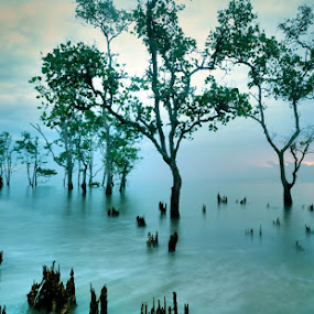 by Harry Aiee - Landscapes Waterscapes
