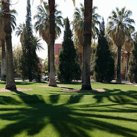 Cool shadows by Pam Laird - City,  Street & Park  City Parks