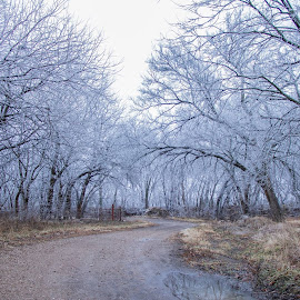 Winter Weather by Kaysi Wolf - Landscapes Weather