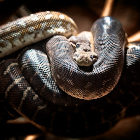 Double Trouble by Jason Brown - Animals Reptiles