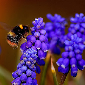 Bee Blue by Angel Weller - Nature Up Close Flowers - 2011-2013 ( macro, blue, bee, summer, flower )