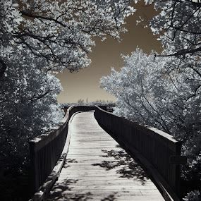 Mangroves I R  by Jeremy Barton - Landscapes Forests ( mangroves, sky, florida, infrared, bridge )