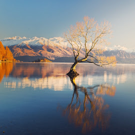 Lake Wanaka by Anupam Hatui - Landscapes Waterscapes ( tree, waterscape, lake wanaka, landscape, new zealand )