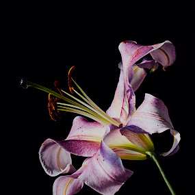 by Mark Cavanah - Flowers Single Flower (  )