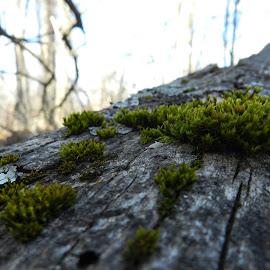 Tree Fungi by Nicholas Cole - Nature Up Close Mushrooms & Fungi ( dead wood, fungi, montana, outdoor, spring )
