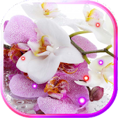 Free Orchids Best LWP APK for Windows 8