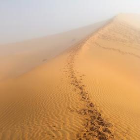 Foggy Desert by Salman Ahmed - Landscapes Deserts ( sand, dunes, desert, nature, fog, landscape )