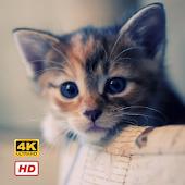 Cat Wallpapers HD 4K APK for Bluestacks