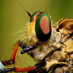 by Dadan Supardan - Animals Insects & Spiders