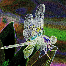 Coloured dragonfly by SANGEETA MENA  - Abstract Patterns
