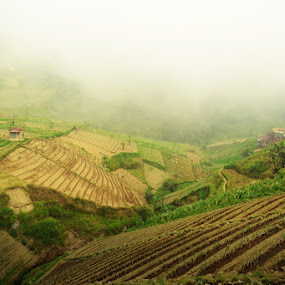 fog enveloped by Krishna Murti - Landscapes Weather ( nature, fog, pwcfoulweather, landscape )