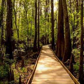 Congaree Swamp by Serge Skiba - Landscapes Forests