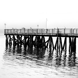 Pier  by Todd Reynolds - Black & White Buildings & Architecture