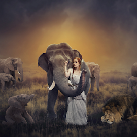Wild Life by Sergiu Pescarus - Digital Art People ( fantasy, elephants, wild animal, baby elephant, lion, wild life, sunset, elephant, wildlife )
