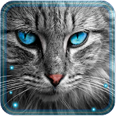 App Cats n Kitties LWP apk for kindle fire