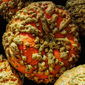 Rare Pumpkin by Dave Walters - Nature Up Close Gardens & Produce ( nature up close, artistic, lumix, pumpkin, colors )