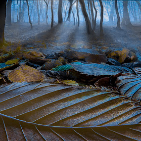Forest Moon by Jerry Kambeitz - Landscapes Forests ( moon, trees, forest, leaves, moonlight,  )