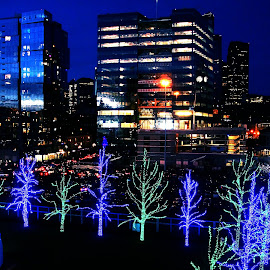 Night lights by Gaylord Mink - Public Holidays Christmas ( buildings, trees, night,  )