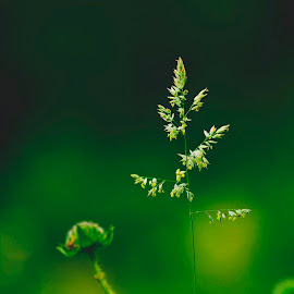by Viorel Irimia - Nature Up Close Other plants
