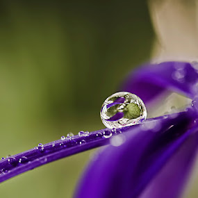 by Sirinat Tanamai - Nature Up Close Water