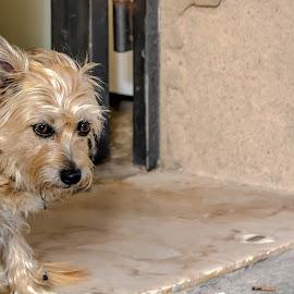 shyness by Jose Maria Vidal Sanz - Animals - Dogs Portraits ( shyness, dog portrait )
