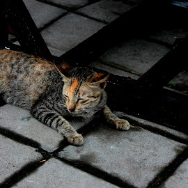 sleeping kitty by Vagdevi Kashyap - Animals - Cats Kittens (  )