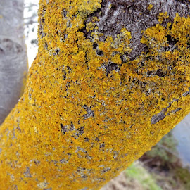 fawthrop bark by Sue Anderson - Nature Up Close Mushrooms & Fungi