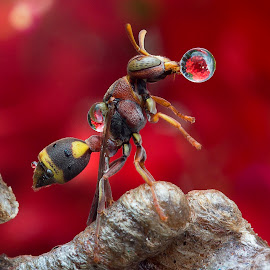 Wasp 160427A by Carrot Lim - Animals Insects & Spiders ( macro, wasp, waterdrop, insect, colours )