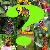 Free Adivina la mariposa APK for Windows 8