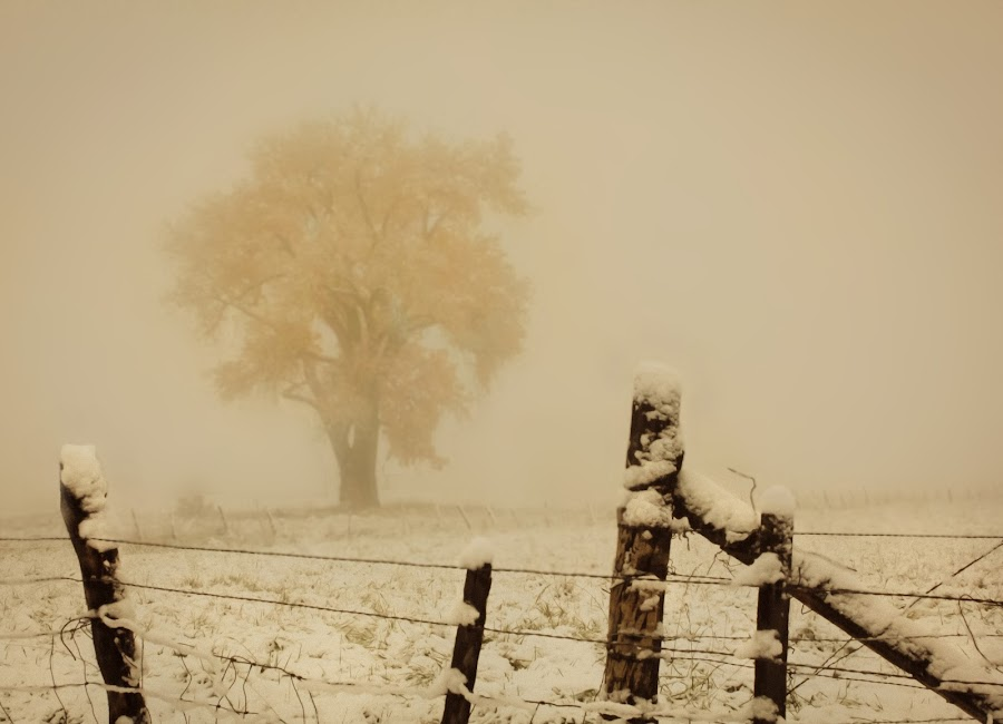 Cottenwood in the Fog by David Short - Landscapes Weather ( farm, winter, tree, fog, warm tones, cottenwood )