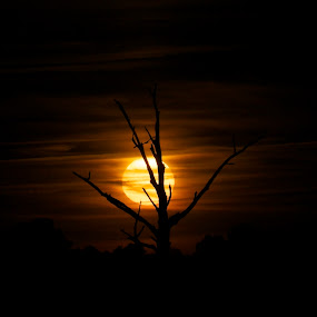 April sunset by Chris Taylor - Landscapes Sunsets & Sunrises ( sky, tree, sunset, silhouette, dark, vignette )