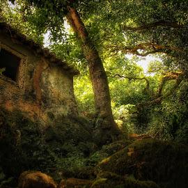 Sintra parque. by Joao Santana - Nature Up Close Gardens & Produce