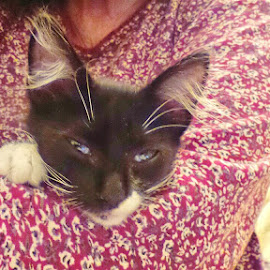 Sleepy Kitten by Susan Brown - Animals - Cats Kittens ( sleepy-eyed, kitten, black and white, blue eyes, cute )