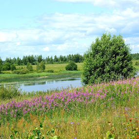 Russian summer by Vero Vero - Landscapes Prairies, Meadows & Fields ( water, russian, grass, blue, green, meadow, summer, river )