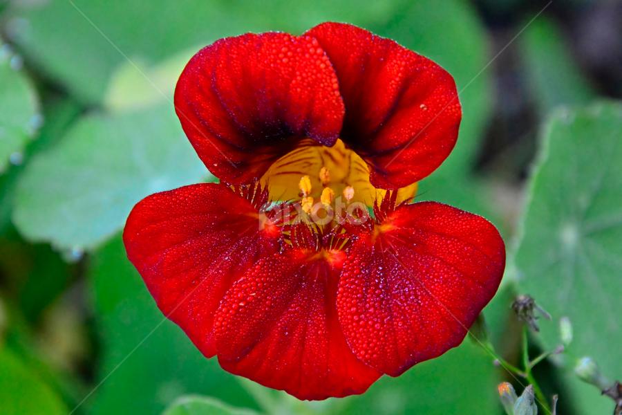 by Rogerio Ribas - Flowers Single Flower