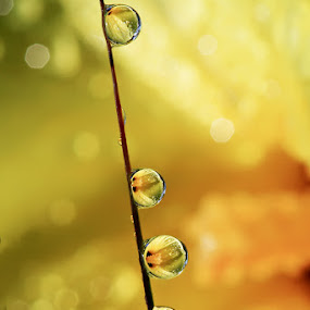 Wanna Reach The Sky by Ahmad Soedarmawan - Nature Up Close Water